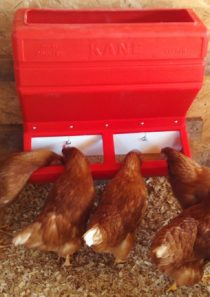 Kane Poultry Feeder