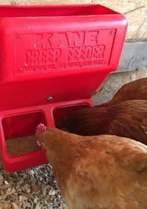 Kane Poultry Creep Feeder