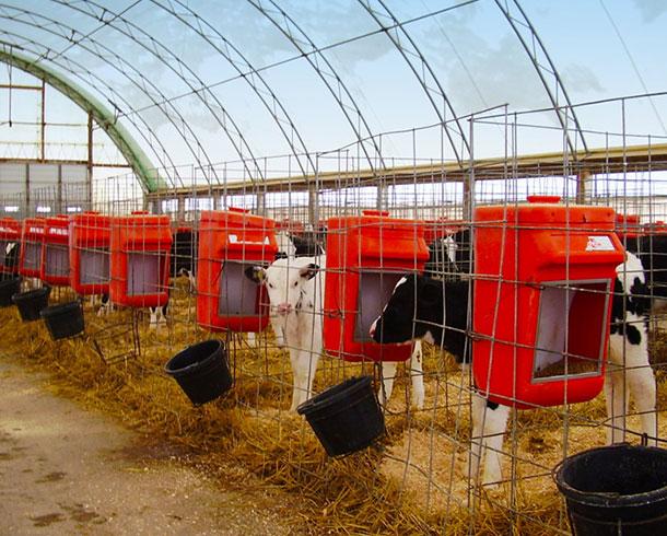 livestock_cowssm